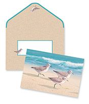 Boxed Notes - Sandpipers